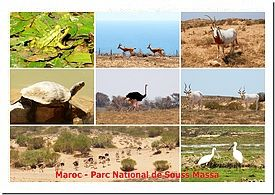 Postkarte Nationalpark Souss Massa
